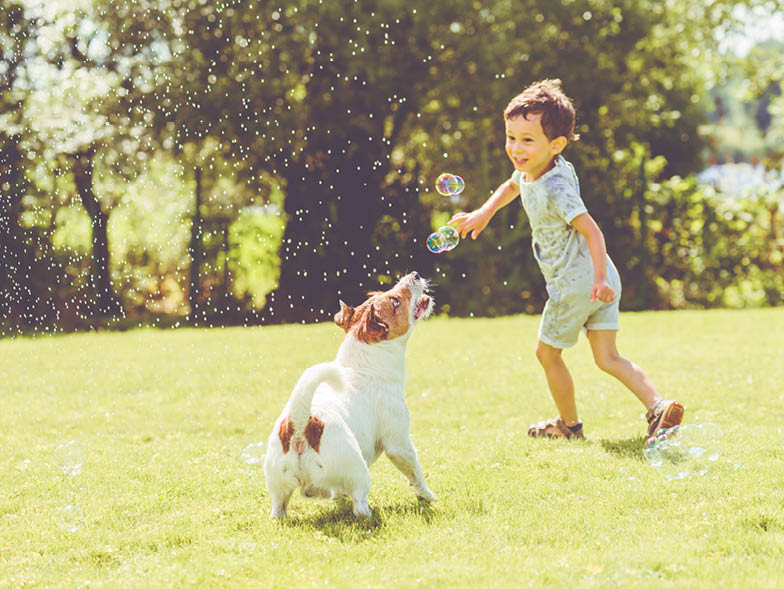 Young child playing with terrier in yard
